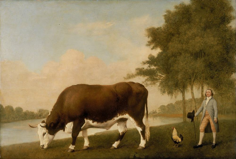 Lincolnshire Ox by George Stubbs, 1724-1806, Walker Art Gallery, Liverpool